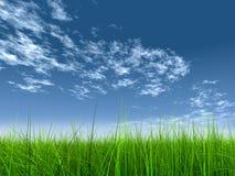 Hohes Auflösunggras über Himmel Stockfoto
