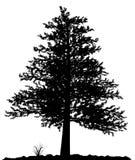 Hohes ausführliches Baumschattenbild auf weißem Hintergrund. Stockbild