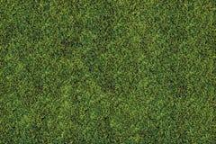 Hohes ausführliches Gras Stockbilder