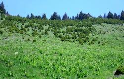 Hohes Berggebiet ohne Bäume stockbild