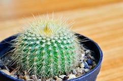Hohes Detail der Kaktusnahaufnahme Lizenzfreie Stockbilder