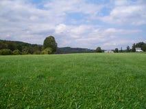 Hohes Feld mit Löwenzahn Stockfotografie