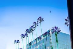 Hohes Gebäude in Hollywood und eine Palme auf einem blauen Himmel Surrea Stockbild
