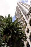 Hohes Gebäude und Palme Stockfotografie