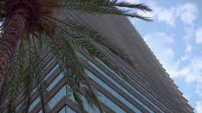 Hohes Glasgebäude nahe bei Palme gegen blauen klaren Himmel Ein Gesch?ftsArbeitsplatz oder Wohnungen stock video footage
