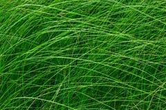 Hohes grünes Gras in einer Wiese Schließen Sie oben vom frischen Gras auf dem Feld Stockbilder