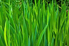 Hohes Gras Stockbild