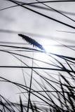 Hohes Gras, das im Wind durchbrennt Stockbild