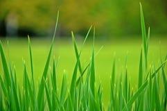 Hohes Gras in einer Wiese Lizenzfreie Stockfotos