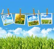 Hohes Gras mit vier Abbildungen auf Wäscheleine Lizenzfreies Stockbild