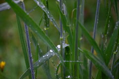 Hohes Gras nach Herbstregen Lizenzfreies Stockbild