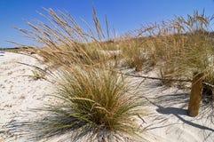 Hohes Gras und Sand, Mittelmeer Stockbilder