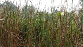 Hohes trockenes Gras auf dem Gebiet Lizenzfreie Stockbilder