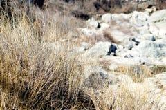 Hohes trockenes Gras entlang Cliff Walk durch das Meer Stockfoto