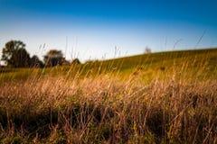 Hohes wellenartig bewegendes Gras lizenzfreies stockbild