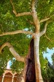 Hohle Bäume im zweiten Hof von Topkapi-Palast, Istanb Stockbild