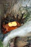 Hohle Baumrinde mit Wasser wo Schwimmblätter lizenzfreie stockfotografie