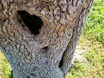 Hohler Baum Stockbild