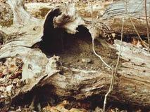 Hohler Baum Stockfoto