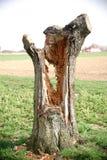 Hohler Baum Stockbilder