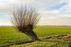 Hohler Weidenbaum nahe bei einem kleinen Abzugsgraben Lizenzfreie Stockfotos