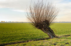 Hohler Weidenbaum nahe bei einem kleinen Abzugsgraben Stockfotos