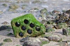 Hohler Ziegelstein auf einem felsigen Strand bei Ebbe bedeckt mit Grünalgen lizenzfreies stockfoto