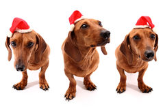 Hohoho dogs Royalty Free Stock Image