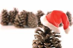 Hohoho pine Royalty Free Stock Images