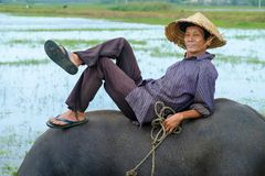 Hoi An / Vietnam, 11/11/2017: Local Vietnamese man with rice hat relaxing and sitting/lying on the back of a water buffalo in a royalty free stock images