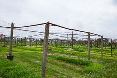 HOI, VIETNAM - 17. MÄRZ 2017: Dorf Tra Que, organisches Gemüsefeld, nahe alter Stadt Hoi Ans, Vietnam Stockfotografie