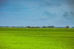HOI, VIETNAM - 17. MÄRZ 2017: Dorf Tra Que, organisches Gemüsefeld, nahe alter Stadt Hoi Ans, Vietnam Lizenzfreie Stockfotos