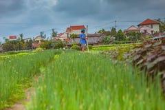HOI, VIETNAM - 17. MÄRZ 2017: Dorf Tra Que, organisches Gemüsefeld, nahe alter Stadt Hoi Ans, Vietnam Lizenzfreies Stockbild