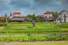 HOI, VIETNAM - 17. MÄRZ 2017: Dorf Tra Que, organisches Gemüsefeld, nahe alter Stadt Hoi Ans, Vietnam Lizenzfreie Stockbilder