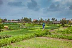 HOI, VIETNAM - 17. MÄRZ 2017: Dorf Tra Que, organisches Gemüsefeld, nahe alter Stadt Hoi Ans, Vietnam Stockbilder