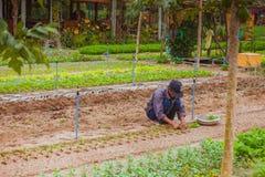 HOI, VIETNAM - 17. MÄRZ 2017: Dorf Tra Que, organisches Gemüsefeld, nahe alter Stadt Hoi Ans, Vietnam Lizenzfreie Stockfotografie