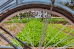 HOI, VIETNAM - 17. MÄRZ 2017: Dorf Tra Que, organisches Gemüsefeld, nahe alter Stadt Hoi Ans, Vietnam Stockbild