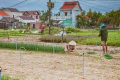 HOI, VIETNAM - MAART 17, 2017: Het dorp van Traque, organisch plantaardig gebied, dichtbij de oude stad van Hoi An, Vietnam Stock Afbeelding