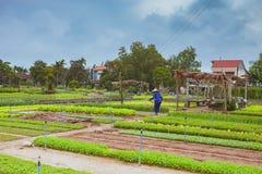 HOI, VIETNAM - MAART 17, 2017: Het dorp van Traque, organisch plantaardig gebied, dichtbij de oude stad van Hoi An, Vietnam Royalty-vrije Stock Foto's