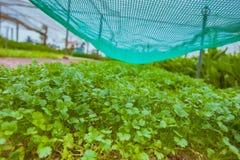 HOI, VIETNAM - MAART 17, 2017: Het dorp van Traque, organisch plantaardig gebied, dichtbij de oude stad van Hoi An, Vietnam Stock Fotografie