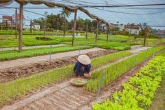 HOI, VIETNAM - MAART 17, 2017: Het dorp van Traque, organisch plantaardig gebied, dichtbij de oude stad van Hoi An, Vietnam Royalty-vrije Stock Afbeeldingen
