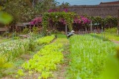 HOI, VIETNAM - MAART 17, 2017: Het dorp van Traque, organisch plantaardig gebied, dichtbij de oude stad van Hoi An, Vietnam Stock Foto's