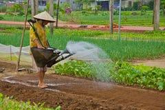 Hoi An, Vietnam - November 2013: De landbouw Stock Foto's