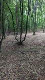 Hoia-Baciu森林 免版税库存图片