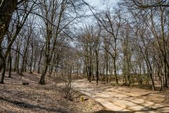 Hoia Baciu - преследовать лес, Румыния стоковое фото