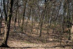 Hoia Baciu - преследовать лес, Румыния стоковые фото
