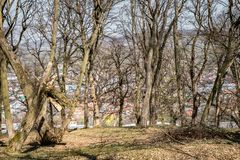 Hoia Baciu - преследовать лес, Румыния стоковая фотография rf
