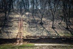 Hoia Baciu - преследовать лес, Румыния стоковые фотографии rf
