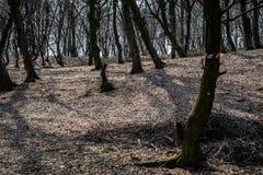 Hoia Baciu - преследовать лес, Румыния стоковые изображения