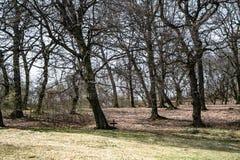 Hoia Baciu - преследовать лес, Румыния стоковое фото rf